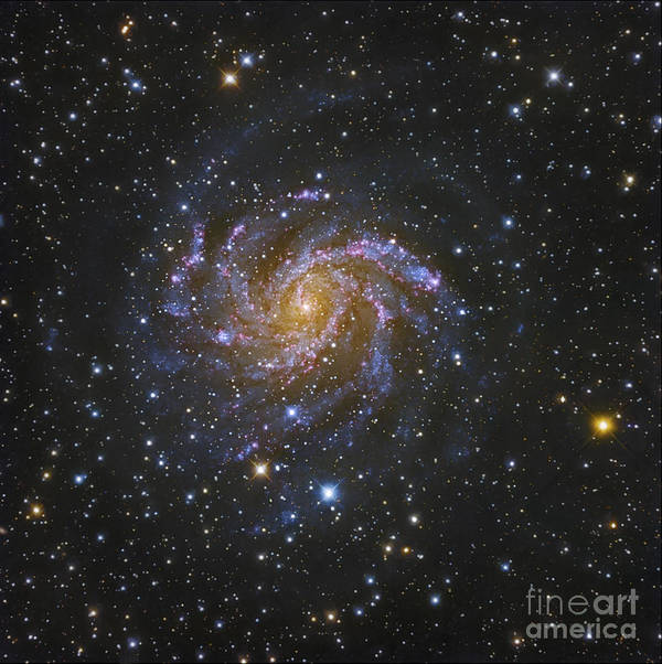 Spiral Galaxy Poster featuring the photograph Ngc 6946, Also Known As The Fireworks by Robert Gendler