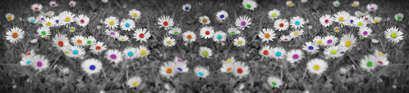 Daisy Poster featuring the photograph Daisy Rainbow by Mark Rogan