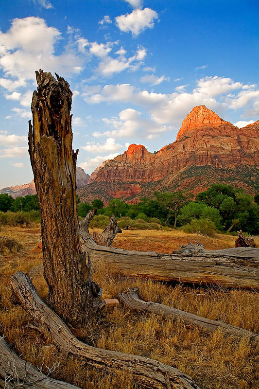 Landscape Poster featuring the photograph Stumped At Zion by Peter Tellone
