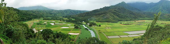 Hanalei Poster featuring the photograph Hanalei Taro Fields by Michael Peychich