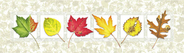 Jon Q Wright Poster featuring the painting Fall Leaf Panel by JQ Licensing