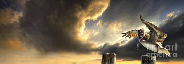 Bird Poster featuring the photograph Pelican Evening by Meirion Matthias