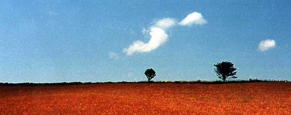 Summer Poster featuring the photograph Summer Field With Two Trees 2 Ae2 by Lyle Crump