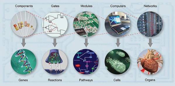 Dna Poster featuring the photograph Electronic And Biologic Systems, Artwork by Equinox Graphics