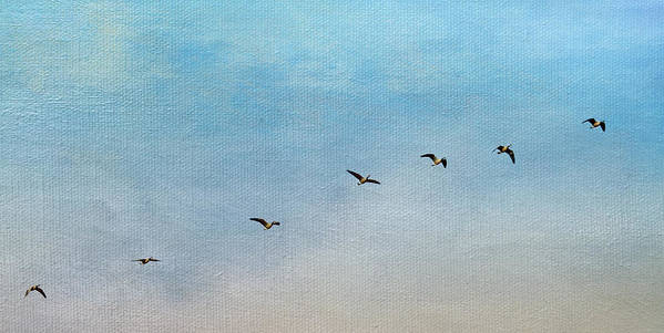 Geese Poster featuring the photograph Seven by Rebecca Cozart