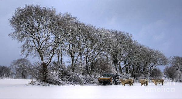 Cows Poster featuring the photograph Winter Morning On The Farm by Sophie De Roumanie