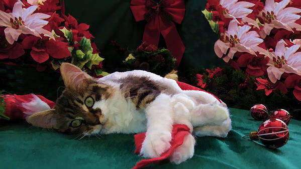 Christmas Joy Poster featuring the photograph Christmas Joy W Kitty Cat - Kitten W Large Eyes Daydreaming About Xmas Gifts - Framed W Poinsettias by Chantal PhotoPix