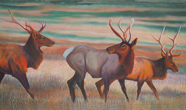 Wapiti. Elk Poster featuring the painting Wapiti In Sunset Glow by Anastasia Savage Ealy