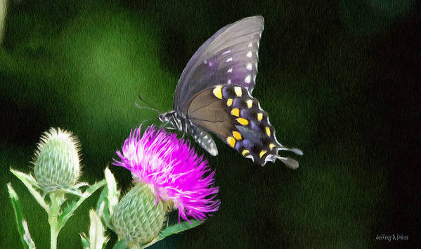 Butterfly Poster featuring the painting Butterfly And Thistle by Jeff Kolker