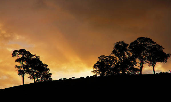 Sunset Poster featuring the photograph Rural Glory by Mike Dawson