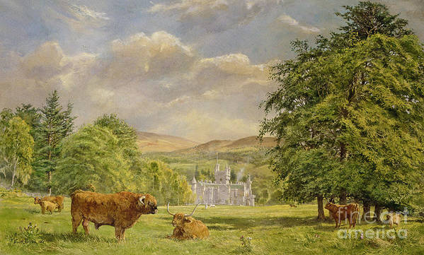 Landscape; Highland Cattle; Angus; Cow; Royal Residence;scottish Baronial; Horn; Horns Park; Bulls; Bull; Balmoral Castle; Balmoral; Hill; Hills; Tree; Trees; Grass; Green; Scottish Poster featuring the painting Bulls At Balmoral by Tim Scott Bolton