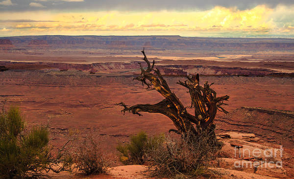 Canyonland Poster featuring the photograph Old One by Robert Bales