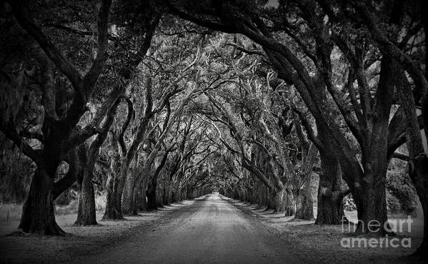 Oak Alley Poster featuring the photograph Plantation Oak Alley by Perry Webster