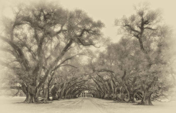 Oak Alley Plantation Poster featuring the photograph And Time Stood Still Sepia by Steve Harrington