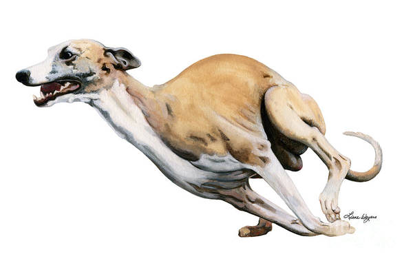 Whippet Poster featuring the painting Whippet In The Wind by Liane Weyers