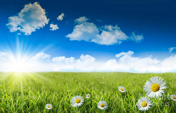Background Poster featuring the photograph Wild Daisies In The Grass With A Blue Sky by Sandra Cunningham