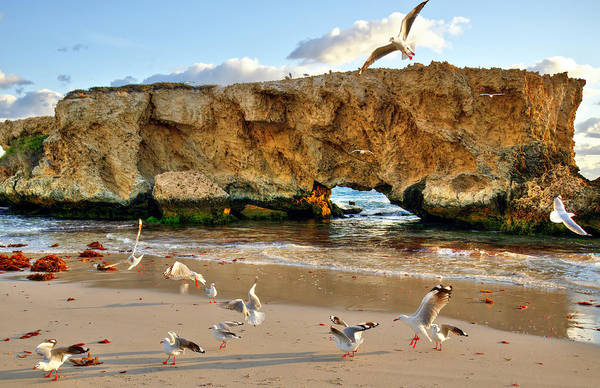 Beach Poster featuring the photograph Two Rocks Wa by Imagevixen Photography