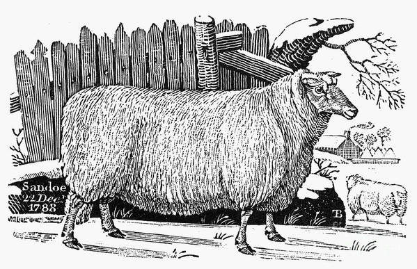 1788 Poster featuring the photograph Sheep, 1788 by Granger