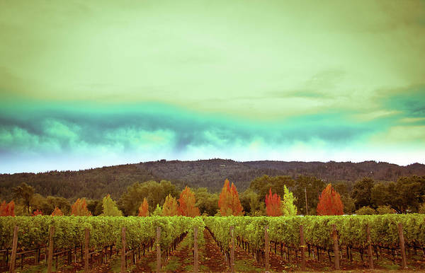 Wine Poster featuring the photograph Wine In Time by Ryan Weddle