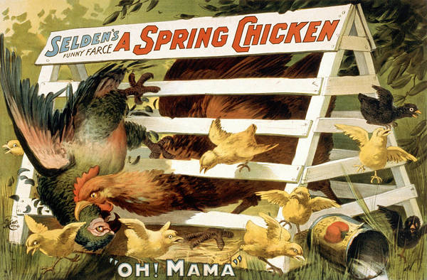 Entertainment Poster featuring the drawing A Spring Chicken by Aged Pixel