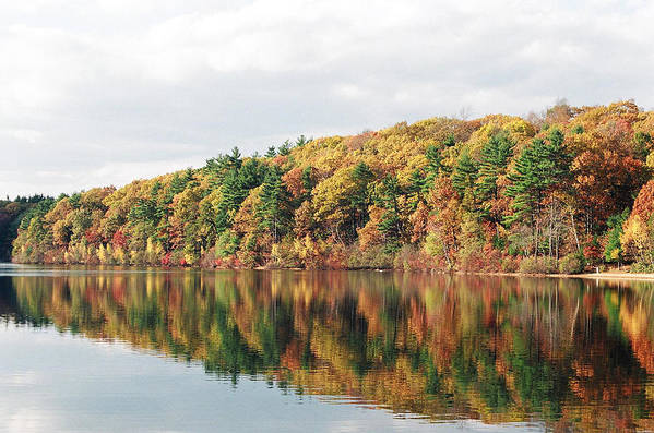 Fall Poster featuring the photograph Fall Foliage At Walden Pond by John Sarnie