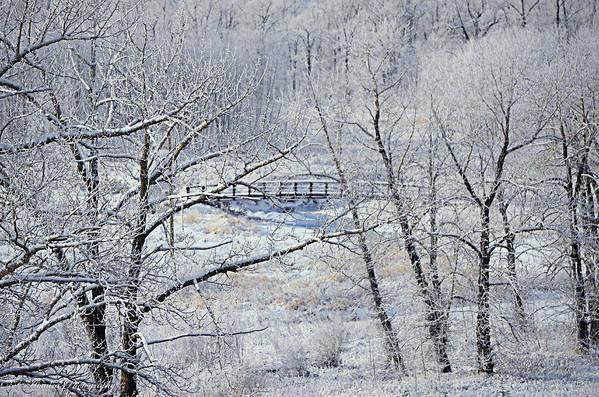 Frozen Bridge Poster featuring the photograph The Frozen Bridge by Maria Angelica Maira