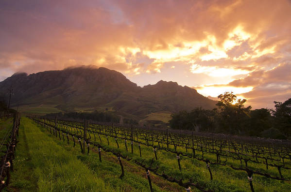 Wine Poster featuring the photograph Wineland Sunrise by Aaron S Bedell