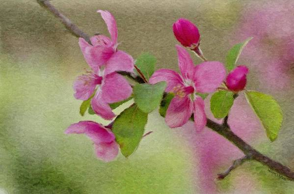 Spring Poster featuring the painting Redbud Branch by Jeff Kolker
