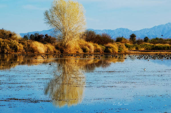 Wildlife Photography Poster featuring the photograph Wildlife Refuge Reflection by La Rae Roberts