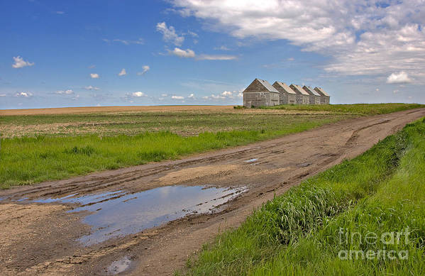 Landscape Poster featuring the photograph White Sheds On A Prairie Farm In Spring by Louise Heusinkveld