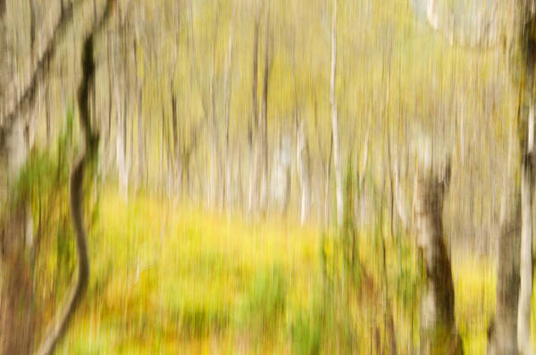 Abstract Poster featuring the photograph Abstract Forest Scenery by Gry Thunes