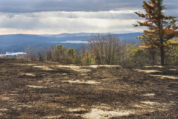Blueberry Poster featuring the photograph Burnt Blueberry Field In Maine by Keith Webber Jr