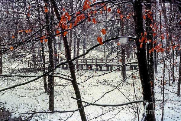 Indiana University Bloomington Bridge Bridges Tree Trees Red Leaves Leaf Snow Landscape Landscapes Poster featuring the photograph Early Snow by Bob Phillips