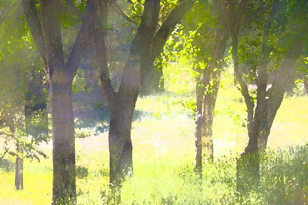 Trees Poster featuring the photograph Oaks 25 by Pamela Cooper