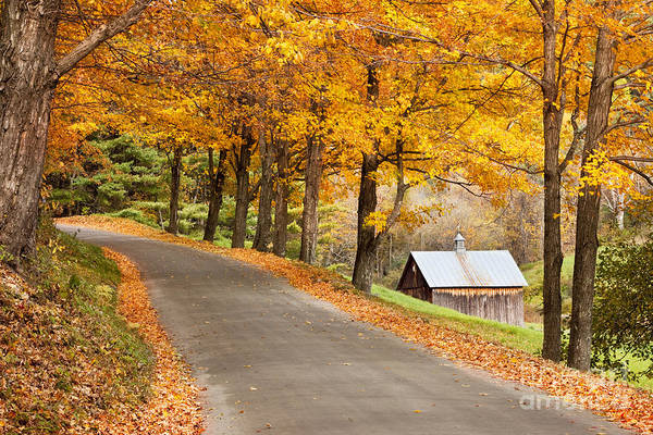 Country Poster featuring the photograph Autumn Road by Brian Jannsen
