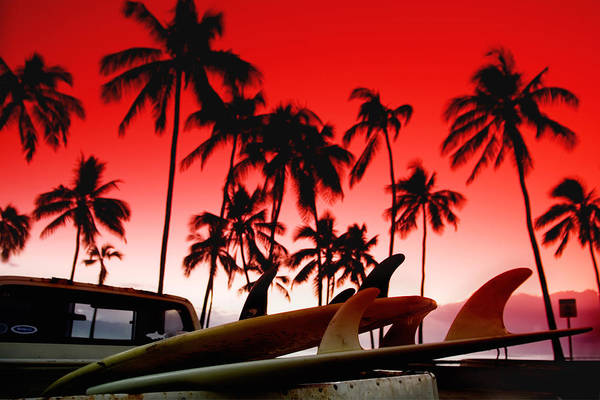 Red Sky Poster featuring the photograph Fins N' Palms by Sean Davey