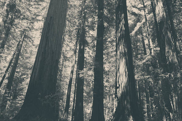 Humboldt Redwoods State Park Poster featuring the photograph A Breath Of Fresh Air by Laurie Search