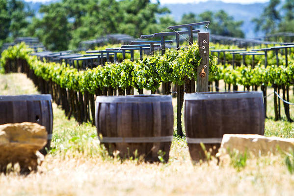 California Poster featuring the photograph A Vineyard With Oak Barrels by Susan Schmitz