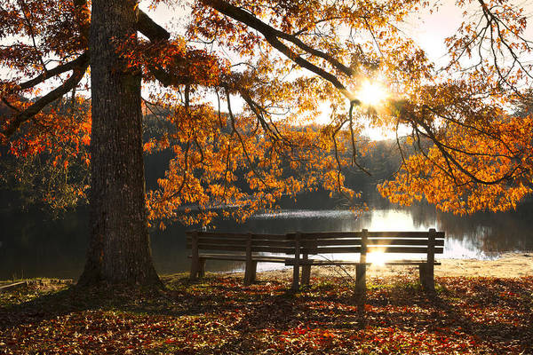 Appalachia Poster featuring the photograph Autumn Beauty by Debra and Dave Vanderlaan