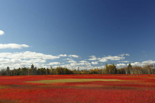 Feb0514 Poster featuring the photograph Autumn Blueberry Field Maine by Scott Leslie