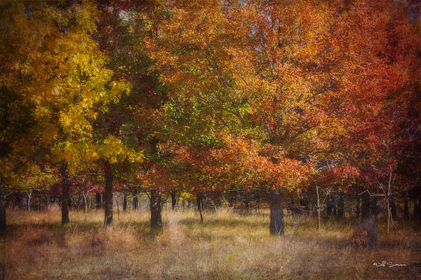Autumn Poster featuring the photograph Autumn's Miracle by Jeff Swanson