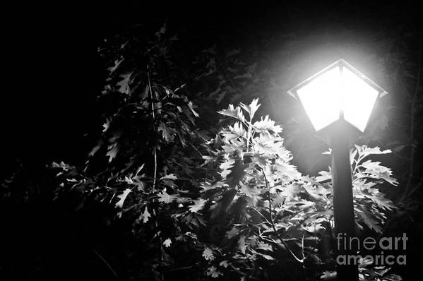 Art Poster featuring the photograph Beautiful Lamp Light In The Dark by Fatemeh Azadbakht