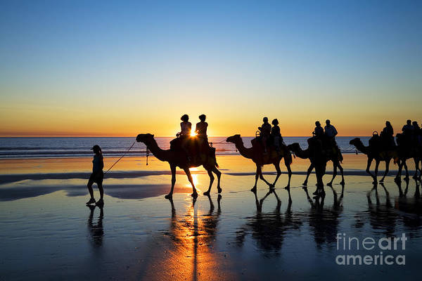 Australia Poster featuring the photograph Camels On The Beach Broome Western Australia by Colin and Linda McKie