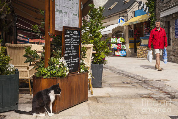 Brittany Poster featuring the photograph Cat And Restaurant Concarneau Brittany France by Colin and Linda McKie