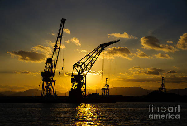 Sunset Poster featuring the photograph Cranes In The Sunset by David Hill