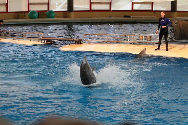 Inner Poster featuring the photograph Dolphin Show - National Aquarium In Baltimore Md - 1212102 by DC Photographer