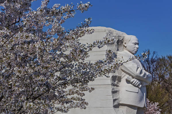 Cherry Blossom Festival Poster featuring the photograph Dr Martin Luther King Jr Memorial by Susan Candelario