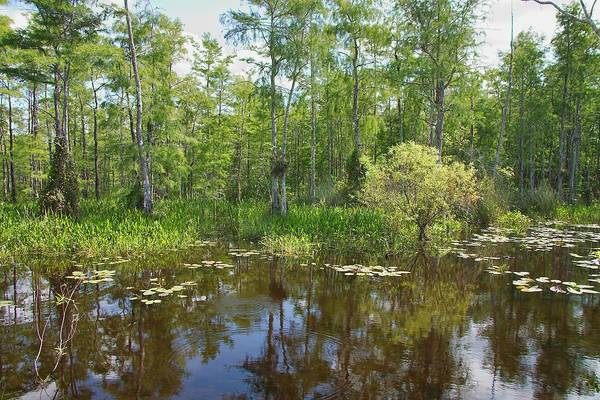 Everglades Poster featuring the photograph Everglades Lake by Rudy Umans