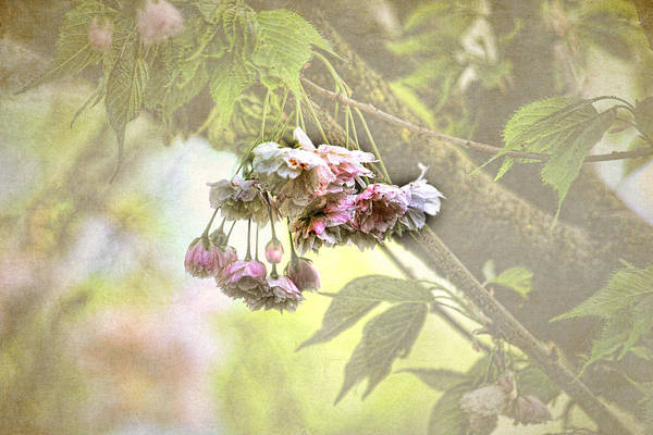 Blossoms Poster featuring the photograph Everyday Blessings by Bonnie Bruno