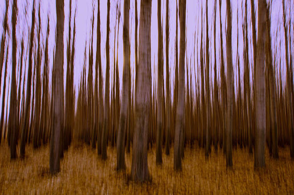 Poplar Poster featuring the photograph Forest Escape by Dan Mihai